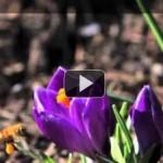 Honeybees Along Johnson Creek