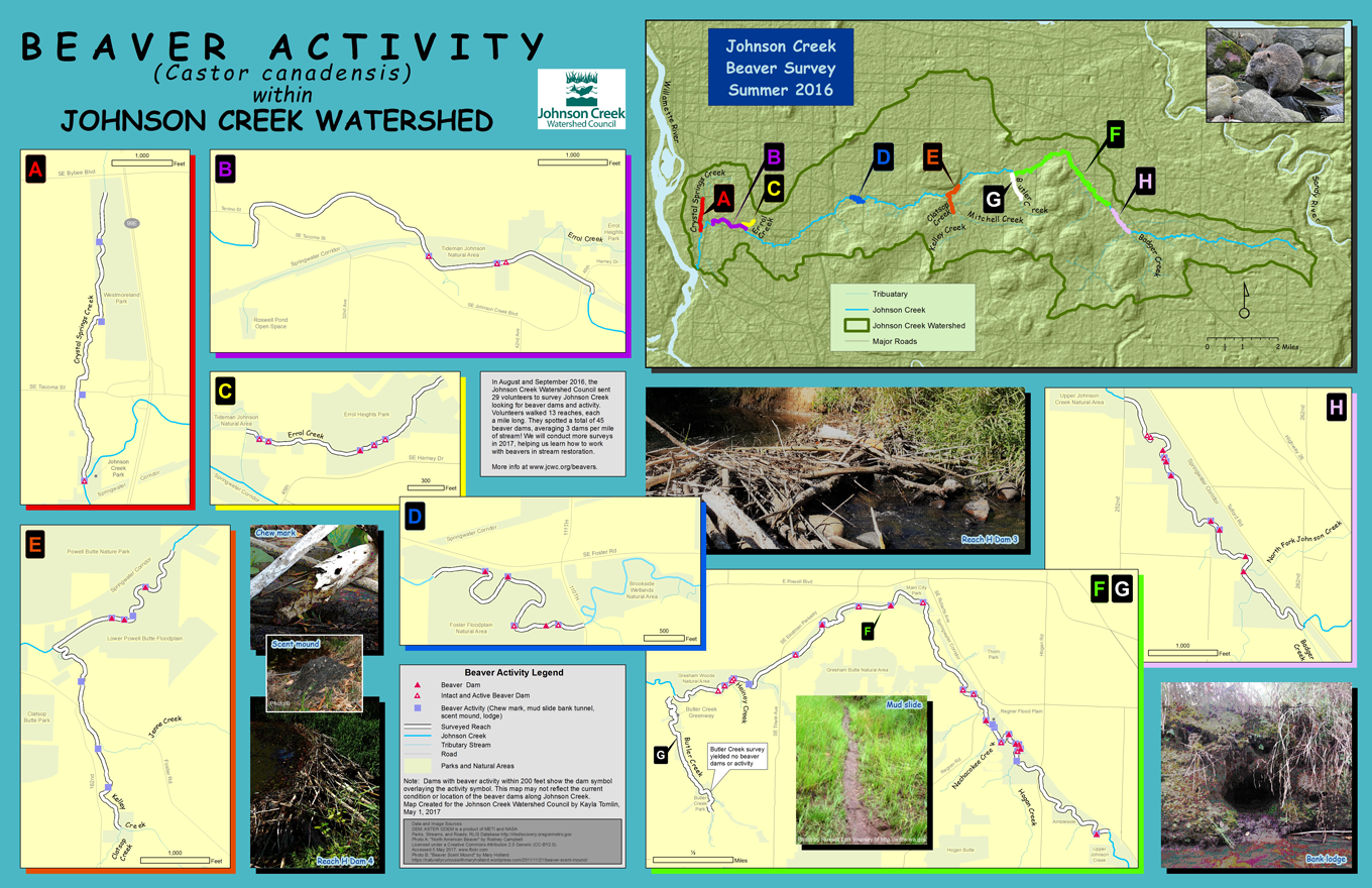 Beaver science johnson creek watershed council areas surveyed in 2016 publicscrutiny Images
